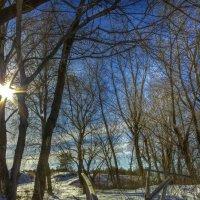 Зимнее тепло :: Denis Aksenov