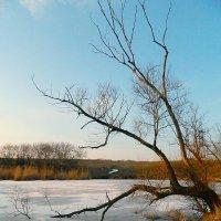 Над замерзшим прудом :: Александр Бурилов