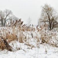 Зимний этюд :: Лидия Цапко