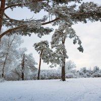 Лыжный денек :: Евгений Никифоров
