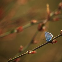Бабочка и вечер :: Gulfiya Sunny photos