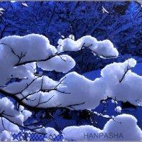 ,,Он превосходный,пушистый и белый,, :: Ханпаша Джаватханов