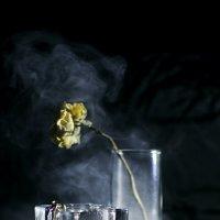 И чайной розы сонный лист :: Allika B
