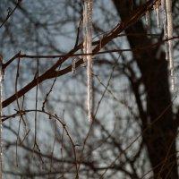 зима :: Bat Viper