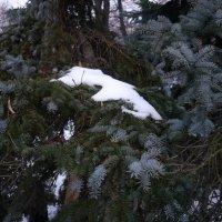 Последний снег :: Виктор Сергеевич Конышев