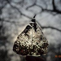 Весенняя зима) :: Валерия Арнаут