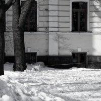 Степень свободы :: Тамара Коренева