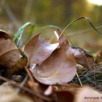 в лесу :: Елена Архипова