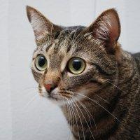 У каждого фотоктовца должен быть свой кот:) ... ФотоКот:) :: Светлана Былинович