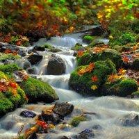 Природа :: Владимир Малюгин