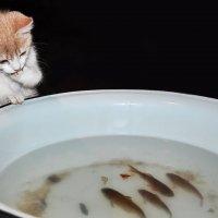 Интересно, как мне теперь поужинать... :: Анатолий Клепешнёв