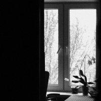 зимнее :: Катя Мохова