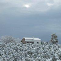 Оливы под снегом :: Ирина