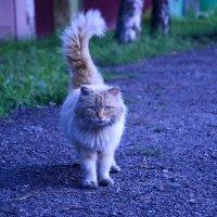 Неизвестный кот :: Екатерина Марфута