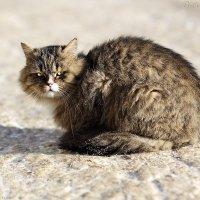 """""""Frozen cat"""" (4C4A6659) :: Виктор Мушкарин (thepaparazzo)"""