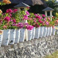 Бали. Resort. :: Евгений Фомин