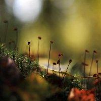 Лесные перешёптывания :: Олег Кашаев