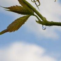 После дождя :: Олеся Карева
