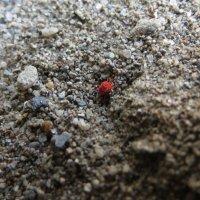 Песчаный паук :: София Феникс