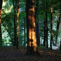 Дерева :: Катерина Кавлакан