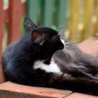 Cat :: Мария Борисова