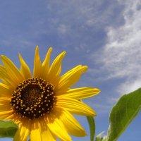flower :: vitali bezushka