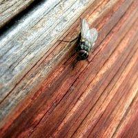 Просто,одинокая муха. :: Антон Апрелков