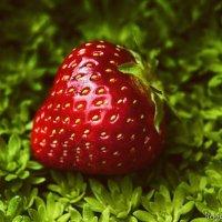 Strawberry :: Антон Богданов