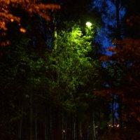 ночной парк :: Александр Хантов