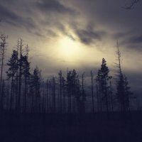 В лесу :: Alena Ldinka