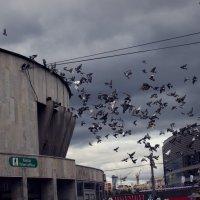 Голуби :: Елена Годунова