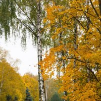 осень :: Екатерина Боркова