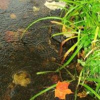 Листья в воде :: Владимир Афанасьев