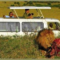 И где обещанные львы??? :: Евгений Печенин