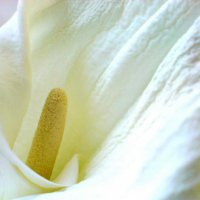 Увядающая красота :: Svetlana Zaytseva