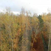 Осенние мотивы :: Людмила Соболева