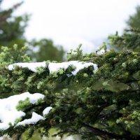Летний снег :: Виктор Никитин