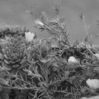 мир цветов :: виталий Цицюрский