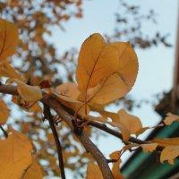 Осень :: Наталья Казанцева