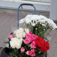 цветы  на дороге :: Катарина Ка