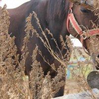 лошадь :: Дмитрий Потапов