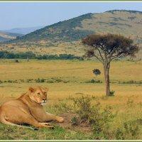 Царица Африки :: Евгений Печенин