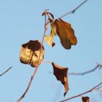 осень :: светлана мартынова