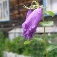 После дождя :: Александра Останина
