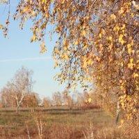 осень :: Светлана Тихонова