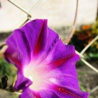 цветочка :: Anna Bakanova