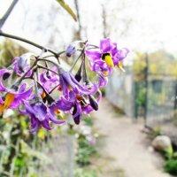 осенние цветочки :: Anna Bakanova