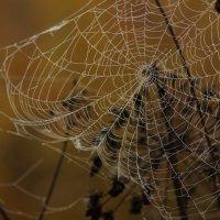 Про паутину :: Валерия заноска