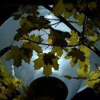 В городском саду ... :: Андрей Уткин