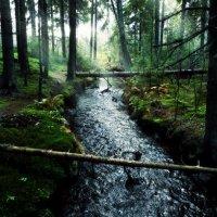 Таинственный ручей :: Екатерина Тумовская